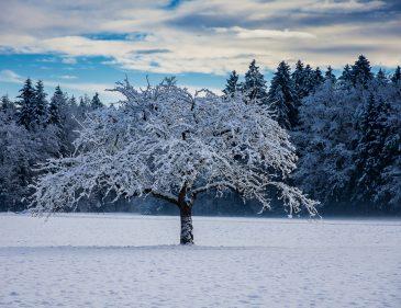 Winterfotografie Tipps - Baum