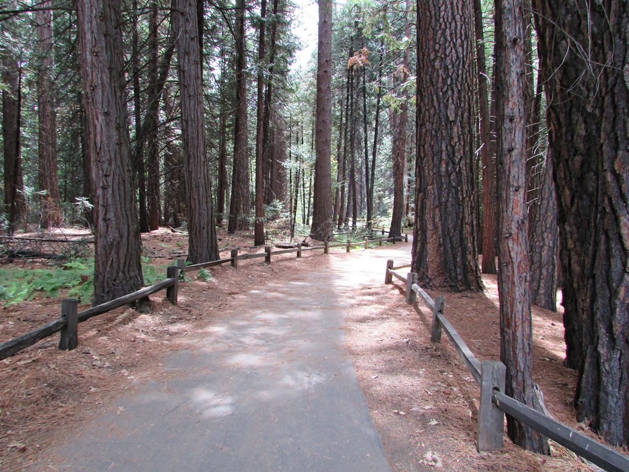 USA Rundreise - Amerika Westküste - Yosemite Nationalpark - Fashionladyloves