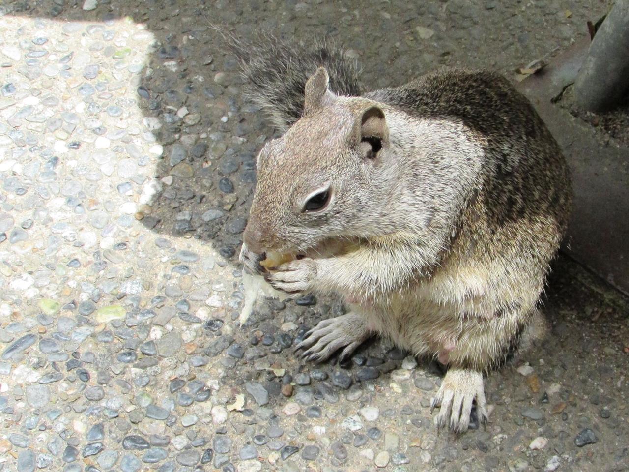 USA Rundreise - Amerika Westküste - Yosemite Nationalpark - Squirrel Hörnchen - Fashionladyloves