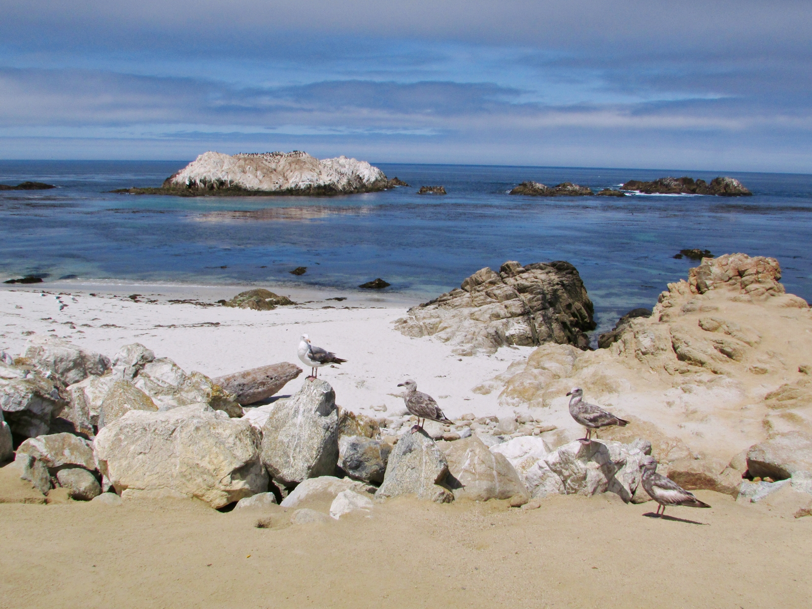 USA Rundreise - Amerika Westküste - 17-Mile Drive - Bird Rock - Fashionladyloves - Travelblog - Reise Blog