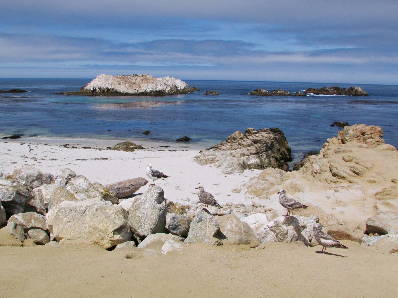 USA Rundreise - Amerika Westküste - 17-Mile Drive - Bird Rock - Fashionladyloves - Travelblog - Reise Blog