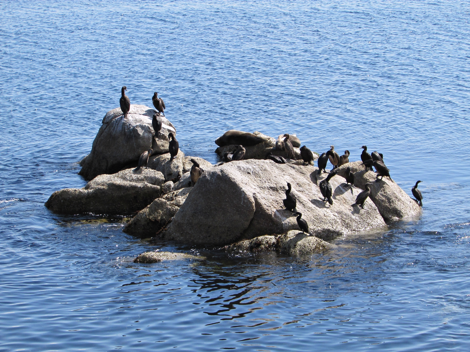 USA Rundreise - Amerika Westküste - Monterey - Monterey Bay Aquarium - Fashionladyloves - Travelblog - Reise Blog