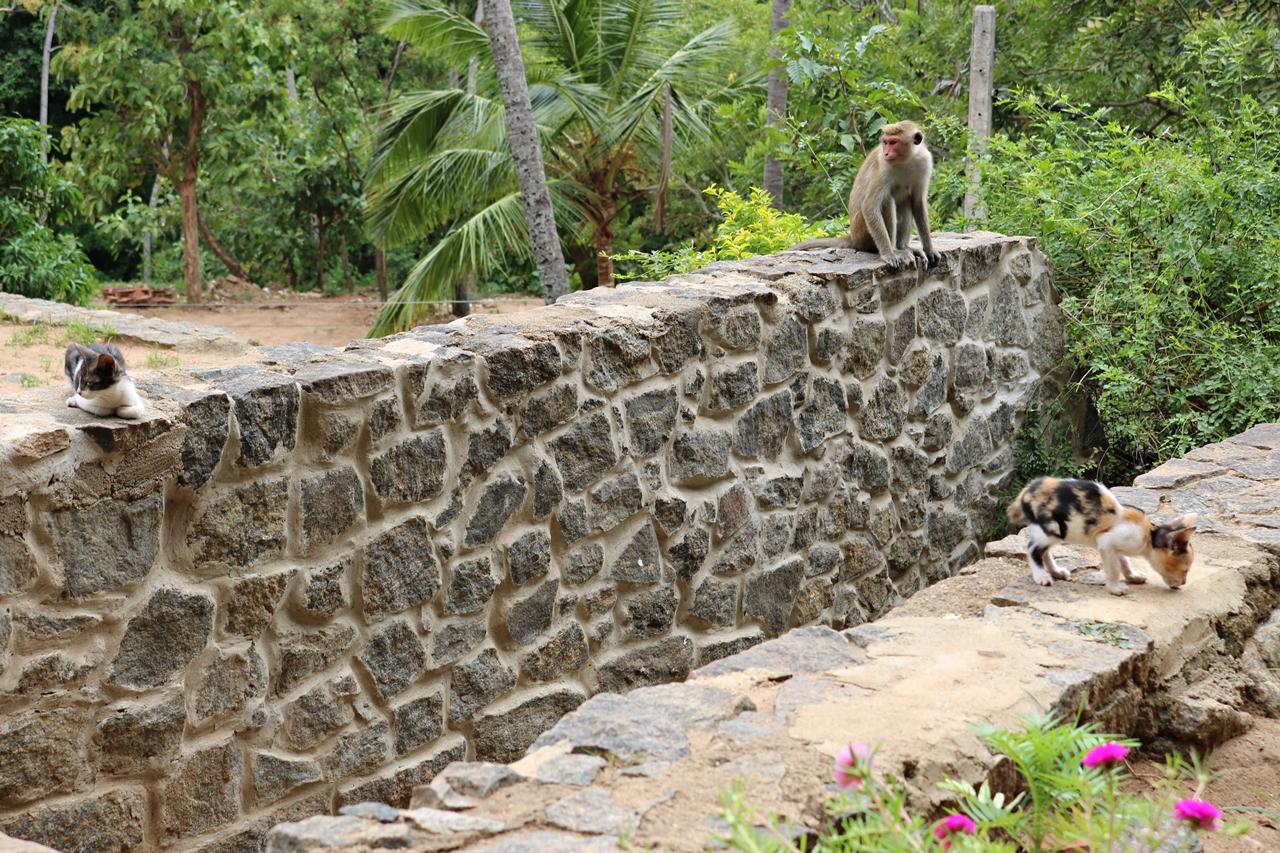 Sri Lanka Travel Guide- Reisebericht - Affe und Katzen bei Tempeleingang - Fashionladyloves by Tamara Wagner - Travel Blog - Reiseblog aus Graz Österreich