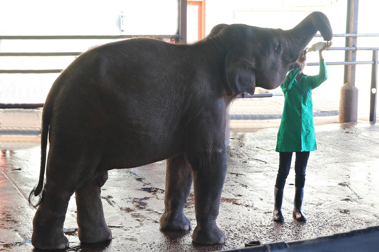 Sri Lanka Travel Guide - Pinnawela Elefantenwaisenhaus - Fütterung der Elefanten - Fashionladyloves by Tamara Wagner - Travel Blog - Reiseblog aus Graz Österreich