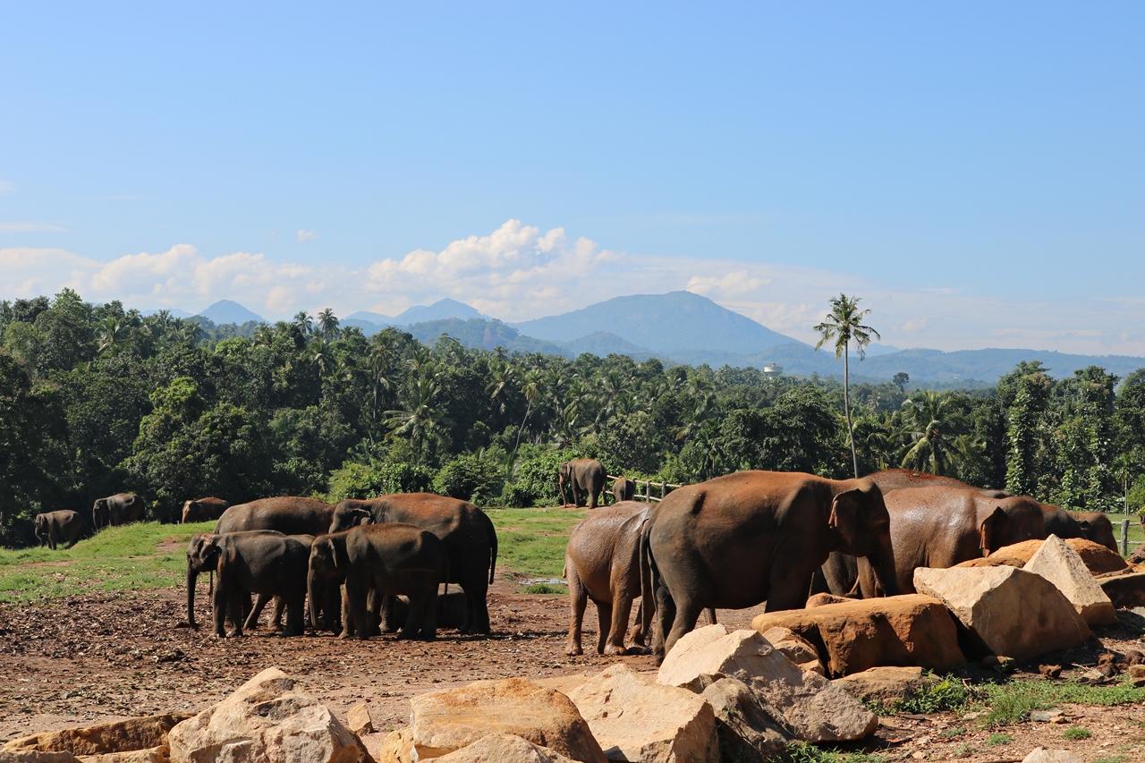 Sri Lanka Travel Guide - Pinnawela Elefantenwaisenhaus - freilaufende Elefanten - Fashionladyloves by Tamara Wagner - Travel Blog - Reiseblog aus Graz Österreich