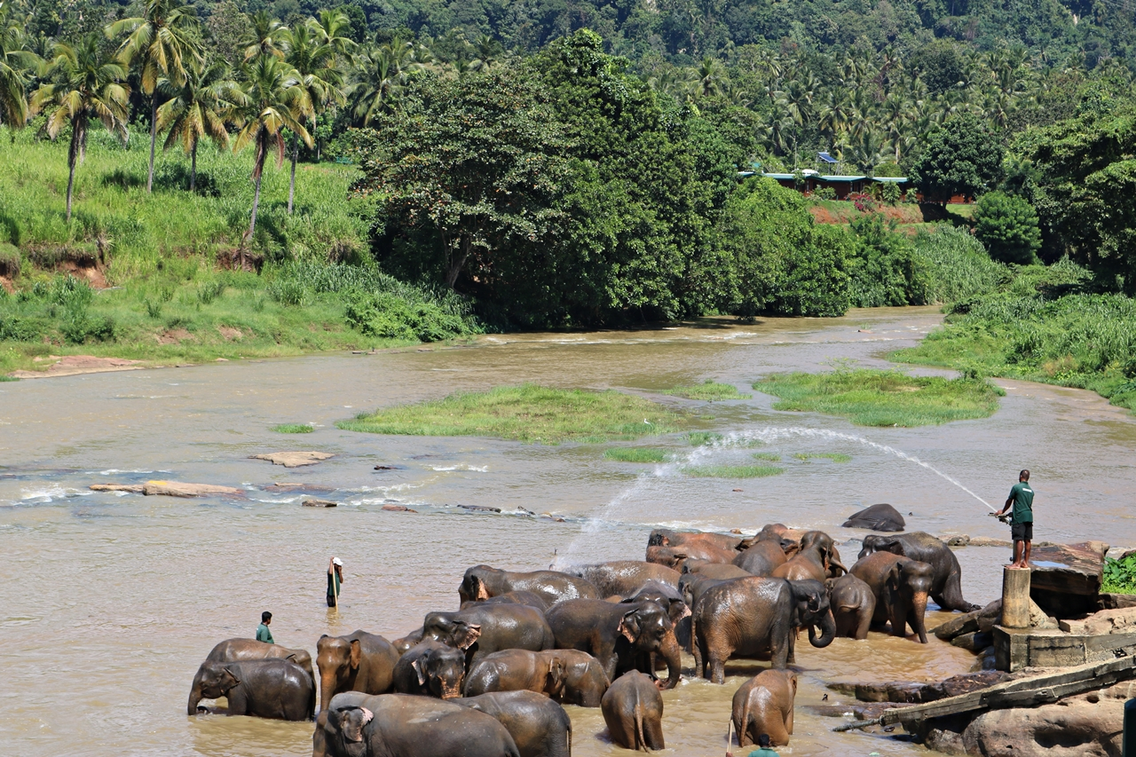 Sri Lanka Travel Guide - Pinnawela Elefantenwaisenhaus - badende Elefanten im Fluss - Fashionladyloves by Tamara Wagner - Travel Blog - Reiseblog aus Graz Österreich