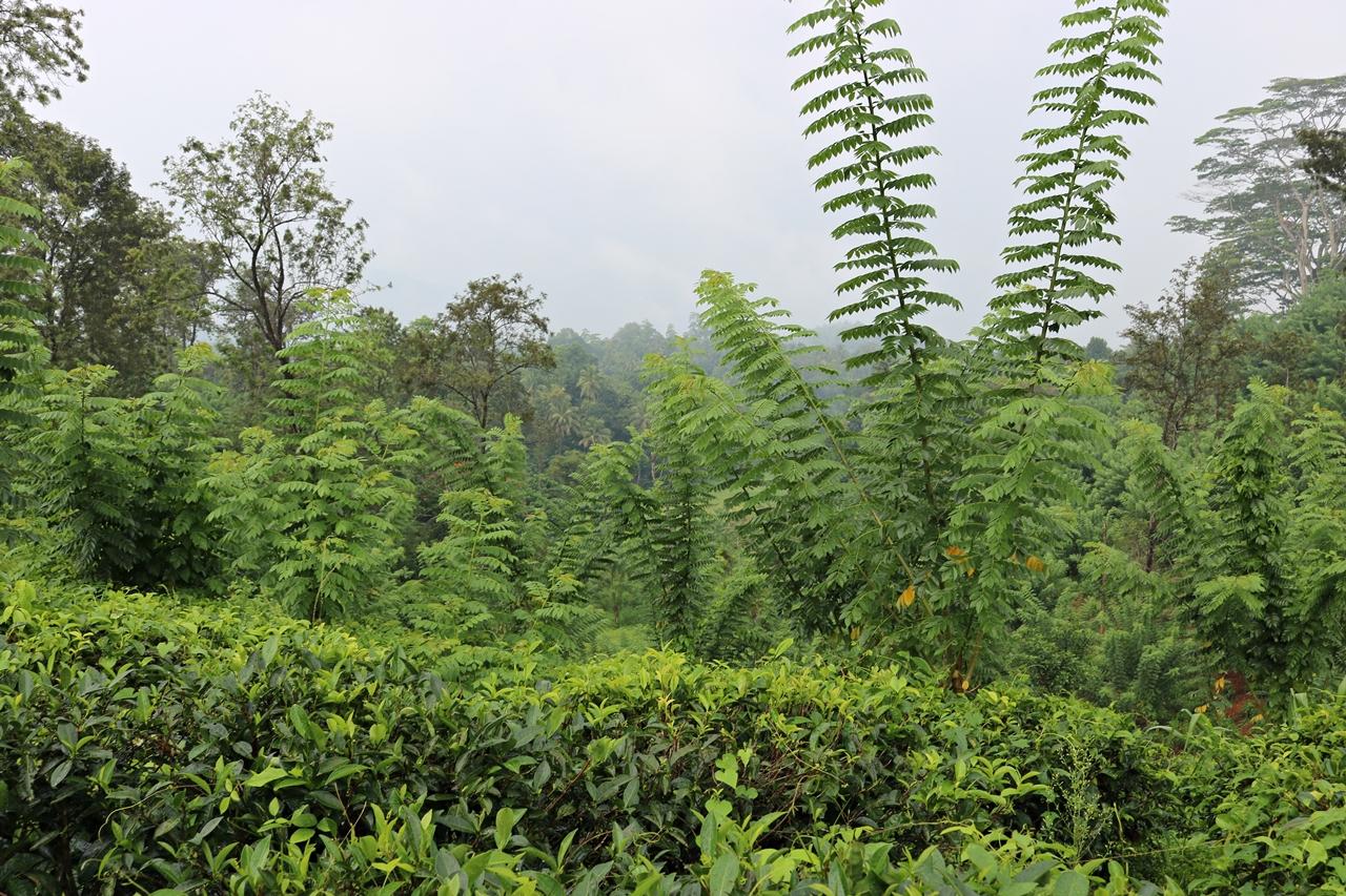 Sri Lanka Travel Guide- Reisebericht - Teeplantage im Hochland - Fashionladyloves by Tamara Wagner - Travel Blog - Reiseblog aus Graz Österreich