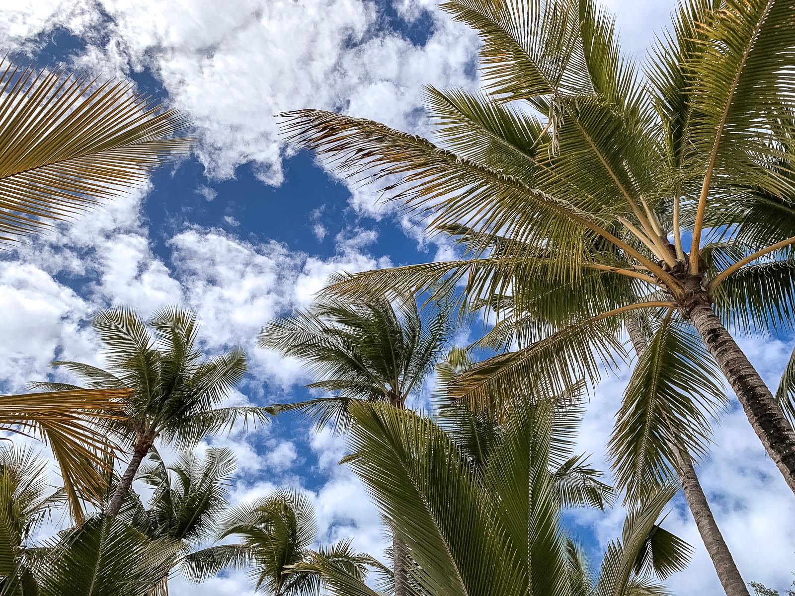 Mauritius Reisebericht - Wissenswertes und Highlights der Trauminsel - Mauritius Reise - Mauritius Sehenswürdigkeiten - Mauritius Flitterwochen - Traumreise - Paradies - schönste Insel - Traumurlaub -Tipps für Mauritius - Mauritus Reiseführer - Mauritius Travel Guide - Palmen auf Mauritius - Fashionladyloves by Tamara